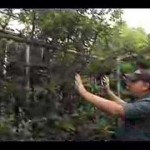 Pruning Fruit Trees and Bushes