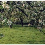 Choosing the Most Suitable Fruit Trees and Bushes for Your Site