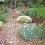 As well as keeping down weeds ground cover plants soften the hard straight lines of a path
